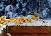 -redbreasted-nuthatch.jpg
