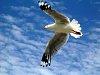 -bird-redcliffe.jpg