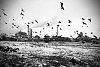 -birds-kosovo.jpg