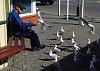 -sumner-seagull-feeding-1280.jpg