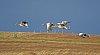-geese-pentaxforums.jpg