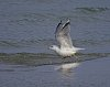 -seagull.jpg
