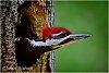 -baby-woodpecker.jpg