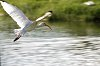 -ibis.jpg