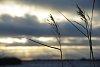 -prairie-grass.jpg