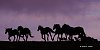 -silhouette-stampede-web-size.jpg