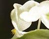 -2013-08-04-flower-ljs.jpg