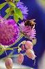 -bumble-bee.jpg