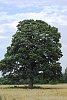 -2013-08-tree-wide-angle.jpg