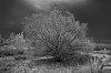 -solitary_tree.jpg