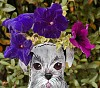 -purpleflowers.jpg