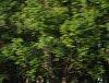 -oiltrees.jpg