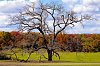 -treemaidenfebforums.jpg