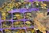 -2008-10-17-imgp9417.jpg