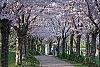 -trees.pf201402.jpg