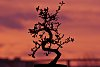 -20140201-bonsai1-kl.jpg