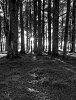 -trees_cam.jpg