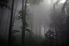 -foggy-forest.jpg