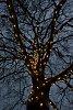 -14-02-jet-pentaxforums-tree-2.jpg
