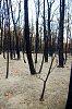 -bushfire.jpg