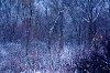 -premiere-neige-plaines-abraham-1280-px.jpg