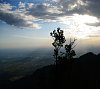 -sandi-peak-over-alb-tree.jpg