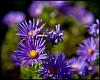 -purple.jpg