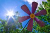 -sun-flower_resized.jpg