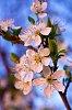 -spring-flower.jpg