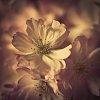-blossom-13-13-.jpg