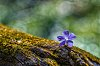 -periwinkle-log-2-color-efex.jpg