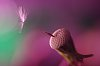 -macro-dandelion-011ritaglio.jpg