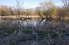 -wetlands-reeds-trees.jpg