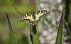 -spring-butterfly.jpg