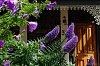 -cottage-garden-1.jpg