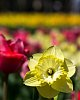 -biltmore-gardens-1524.jpg