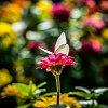 -butterfly-bokeh.jpg