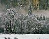 -trees-snow.jpg