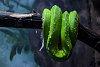 -green-snake.jpg