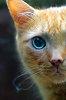 -cat-edit.jpg