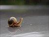 -devito-snail.jpg