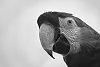 -macaw-contest.jpg