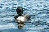 -vacances-2014-06-rolllins-pond-280.jpg