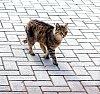 -cat.jpg