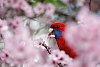 -20140906-spring-colour02b.jpg