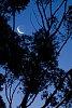 -twilight-moon.jpg