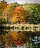 -arbutus-pond-1-small-.jpg