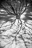 -treeshadow2.jpg
