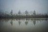 -mirror_trees.jpg