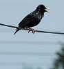 -converging-lines-starling.jpg